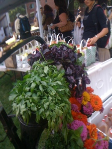 Wednesday Farmer's market in Harvard Square.
